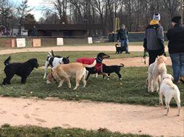 Monthly Pop Up Dog Parks